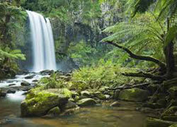 It was in the remote rainforests of Borneo that McArthur Skincare's story begins