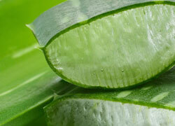 Aloe Vera - In a highly concentrated form